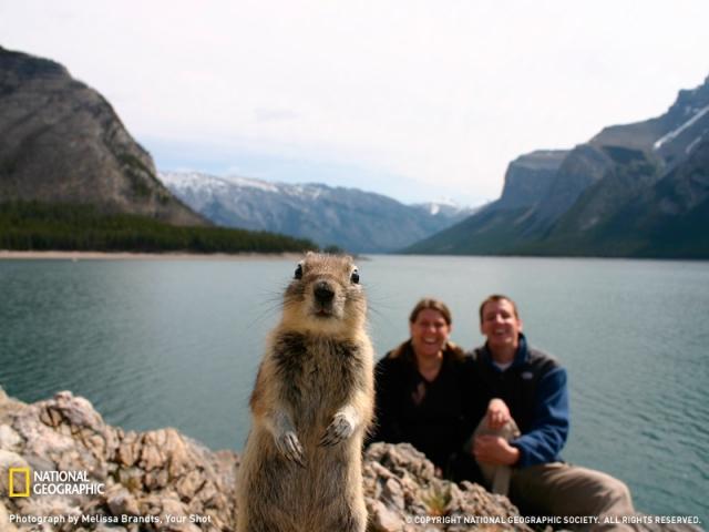 Écureuil pris en photo