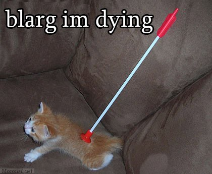 lolcat blarg im dying