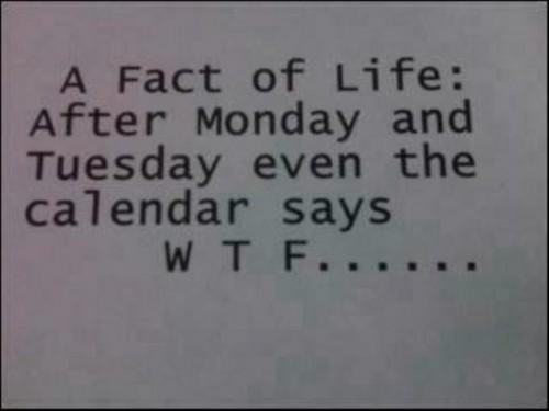 {Pic} Le WTF de la semaine…