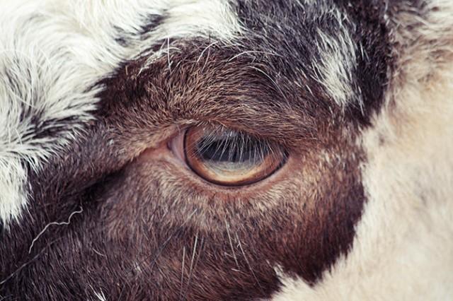 Caged  - Les yeux parlent d'eux même