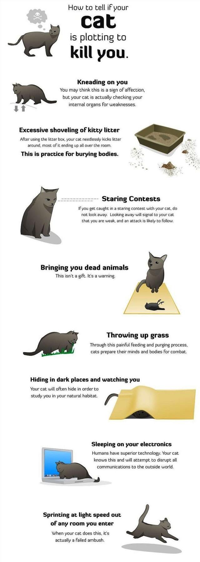 Votre chat essaye de vous tuer