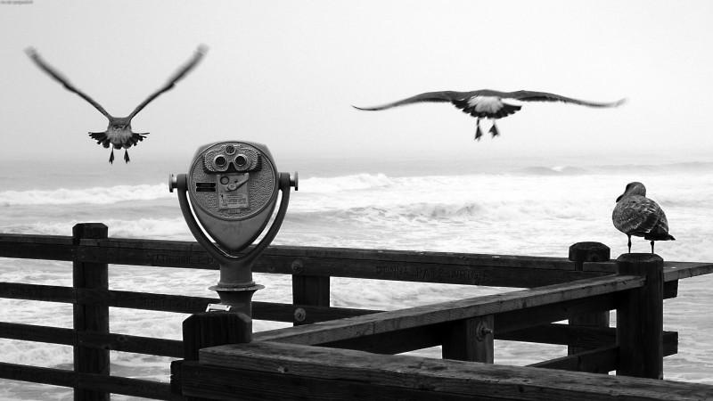 Oiseaux du port
